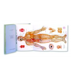 Acupuncture Book Charts (BC102)