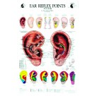 Ear Reflex Chart by Terry Oleson (BC105)