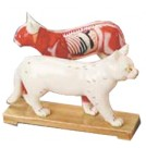 Cat Acupuncture Model on Wooden Stand (HM33)