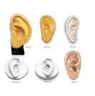 Ear Models